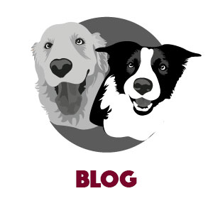 Hondenbrokken blog