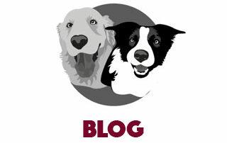 Hondenbrokken.nl blog
