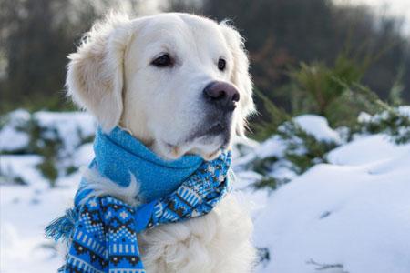 Kunnen honden het koud hebben?