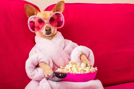 Kunnen honden TV kijken?