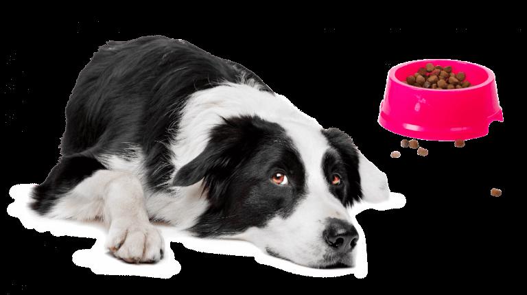 Hondenbrokken