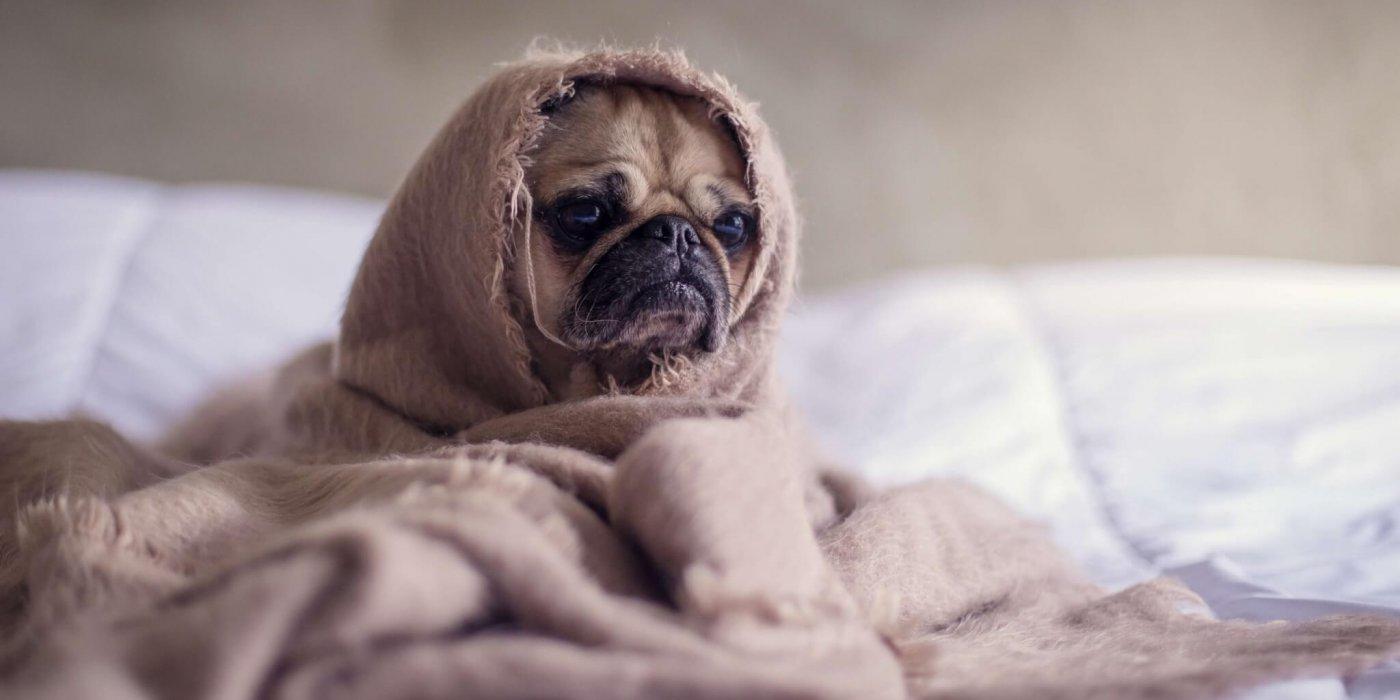 hond diarree